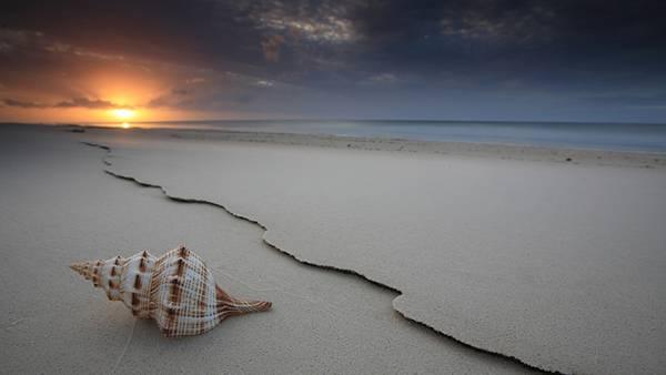 05.潮の引いた海岸に落ちたホラガイを撮影した美しい写真壁紙画像
