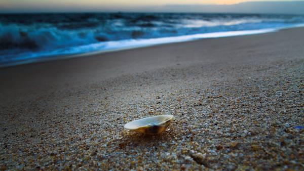 06.海岸の砂浜の上に落ちた貝殻を撮影した綺麗な写真壁紙画像