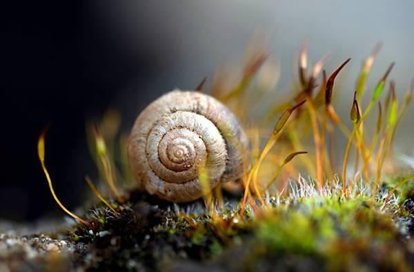 08.カタツムリの殻をマクロ撮影した綺麗な写真壁紙画像