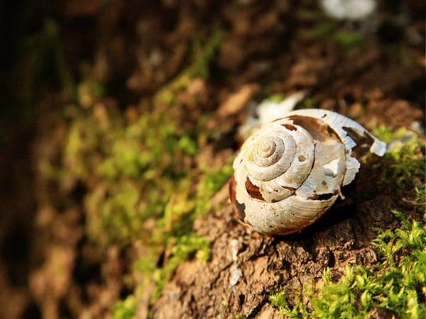 09.ひび割れた穴の開いたカタツムリの殻を撮影した写真壁紙画像