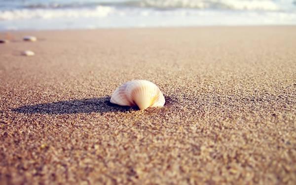 10.砂浜に落ちたピンクの貝殻を撮影した可愛い写真壁紙画像