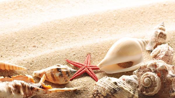11.巻き貝やヒトデを集めて撮影した写真壁紙画像