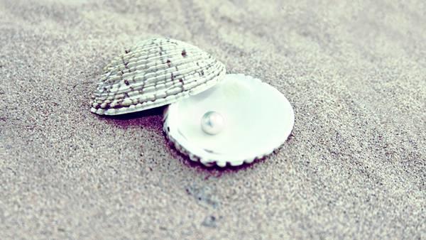 12.貝殻の中の真珠を撮影した綺麗な写真壁紙画像
