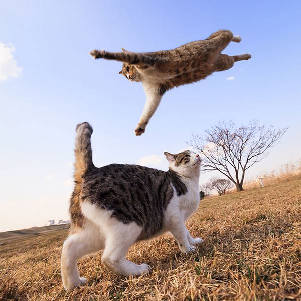 見るだけで元気が溢れてくる間宮誠爾さんの猫写真作品 - 01
