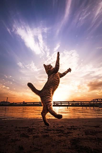 見るだけで元気が溢れてくる間宮誠爾さんの猫写真作品 - 02