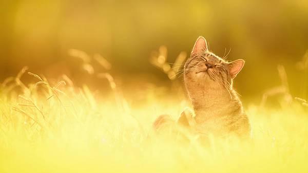 見るだけで元気が溢れてくる間宮誠爾さんの猫写真作品 - 03