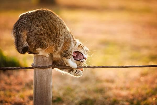 見るだけで元気が溢れてくる間宮誠爾さんの猫写真作品 - 04