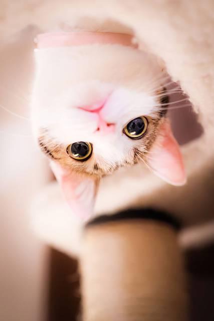 見るだけで元気が溢れてくる間宮誠爾さんの猫写真作品 - 05