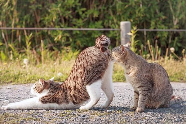 見るだけで元気が溢れてくる間宮誠爾さんの猫写真作品 - 06
