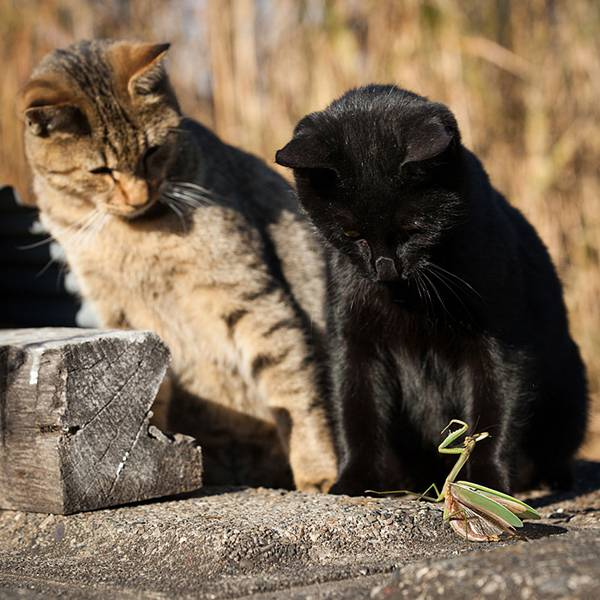 見るだけで元気が溢れてくる間宮誠爾さんの猫写真作品 - 08