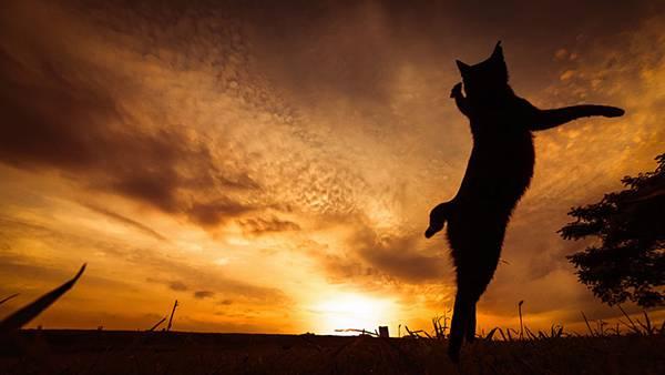 見るだけで元気が溢れてくる間宮誠爾さんの猫写真作品 - 10