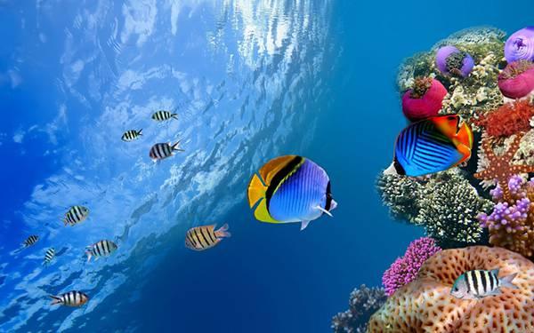 03.海の中のサンゴ礁と熱帯魚を撮影した美しい写真壁紙画像