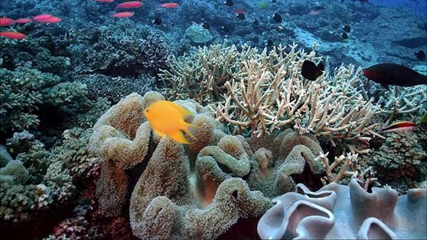 08.サンゴ礁と黄色い魚を撮影した可愛い写真壁紙画像