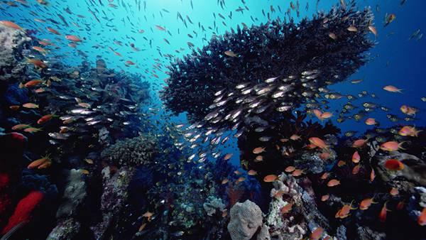 09.サンゴ礁とたくさんの魚達を撮影した迫力の写真壁紙画像