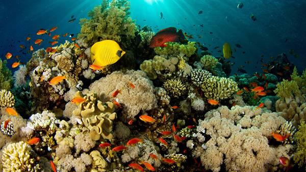 10.光の差し込む海の中のサンゴ礁や熱帯魚たちの綺麗な写真壁紙画像