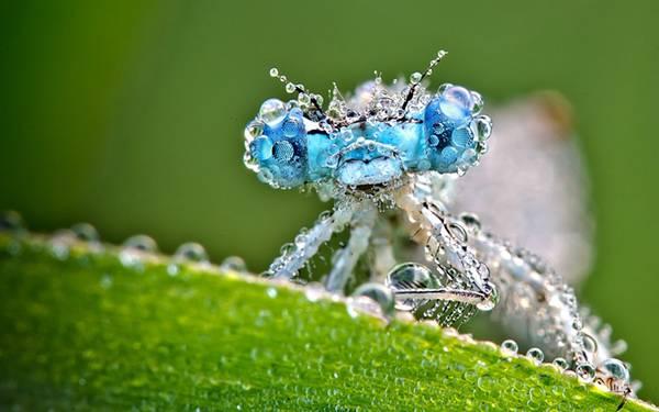 03.宝石のような水滴のついたトンボをマクロ撮影した美しい写真壁紙画像