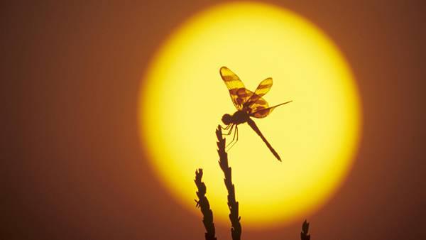 11.夕日の中のトンボのシルエットを撮影した綺麗な写真壁紙画像