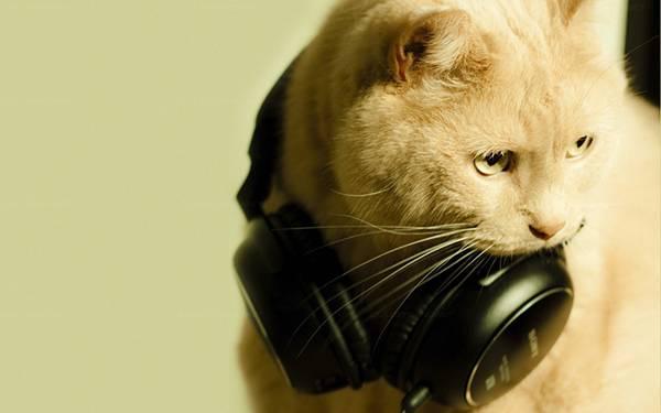 12.ヘッドホンを首にかけた猫を撮影した可愛い写真壁紙画像