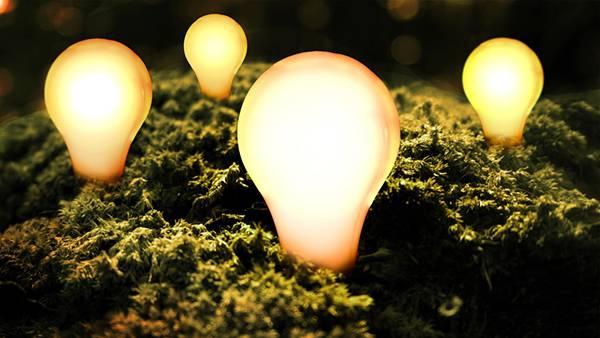 09.植物と白熱電球を撮影した美しい写真壁紙画像