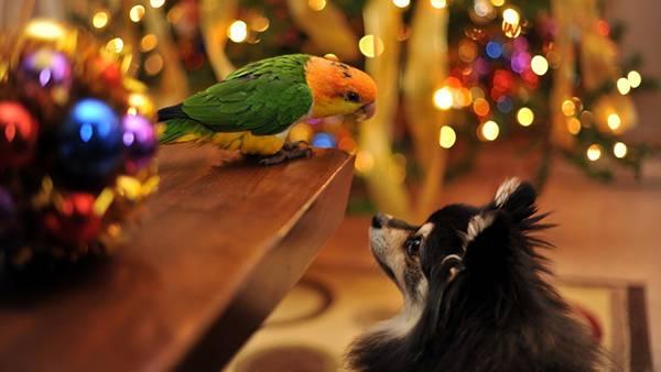 01.見つめ合うインコと犬の綺麗で可愛い写真壁紙画像