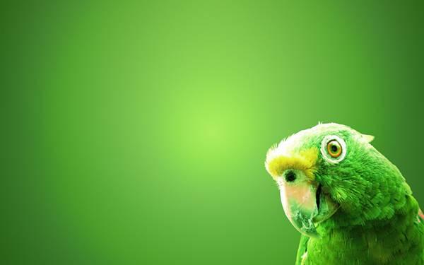 04.美しいグリーンで統一されたインコの綺麗な写真壁紙画像