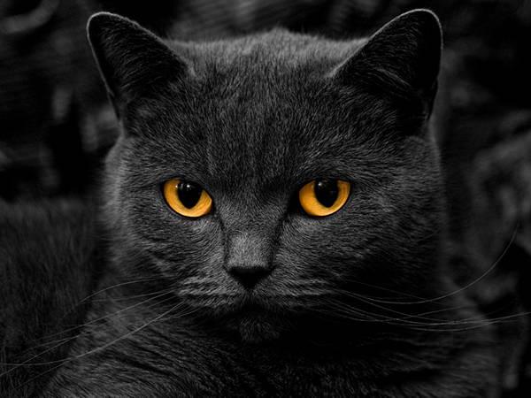 02.オレンジ色の目をした猫をパートカラーで撮影した可愛い写真壁紙画像