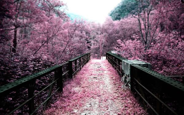04.鮮やかなピンク色の桜をパートカラーで撮影した美しい写真壁紙画像