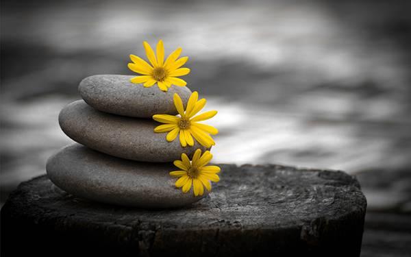 09.積み上げた石の上の花をパートカラーで撮影した綺麗な写真壁紙画像