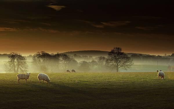 04.夕日に照らされた草原の羊を撮影した美しい写真壁紙画像