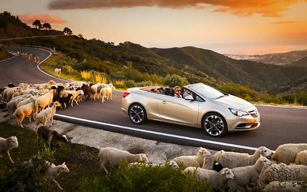 05.オープンカーについていく羊の群れを撮影した可愛い写真壁紙画像