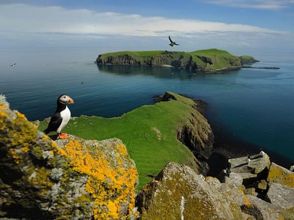 06.無人島とそこに住むニシツノメドリを撮影した可愛い写真壁紙画像