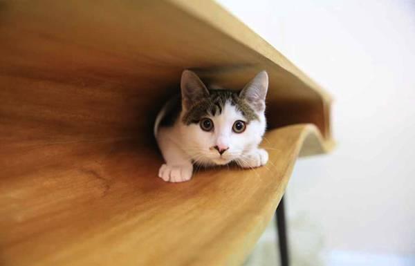 隙間には猫がちょうど入れるスペースがあります。