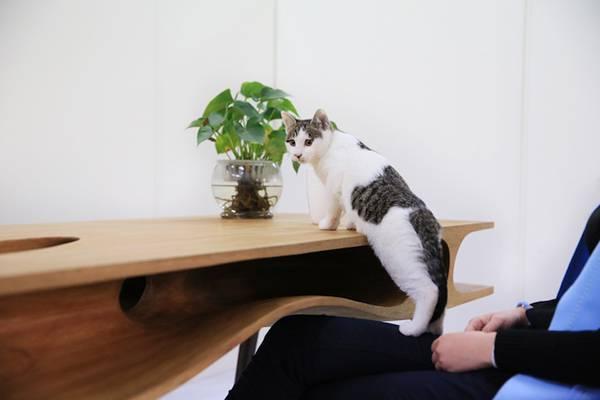 こんな机で猫さんと一緒にまったりしてみたい…。