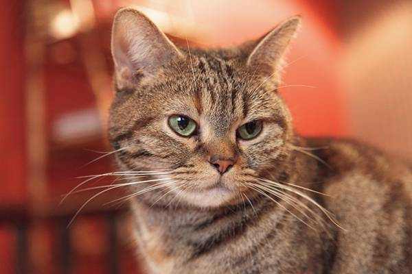 猫カフェの猫ちゃんのフリー写真素材
