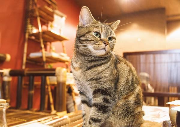 お座りする猫ちゃんのフリー写真素材