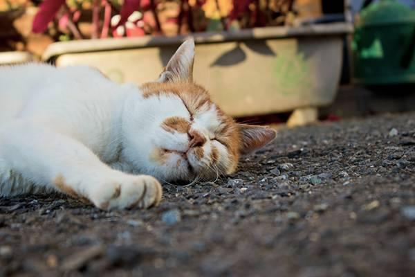 アスファルトで爆睡中の猫のフリー写真素材