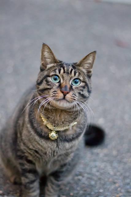 お座りする猫を撮影したフリー写真素材