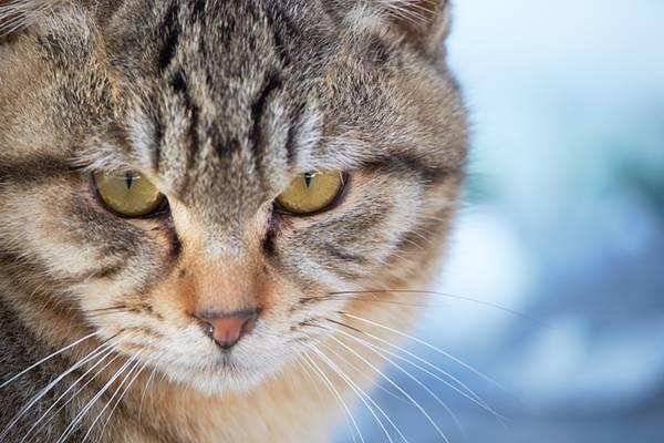 険しい表情の猫のフリー写真素材