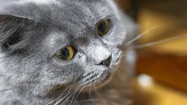 威圧する猫