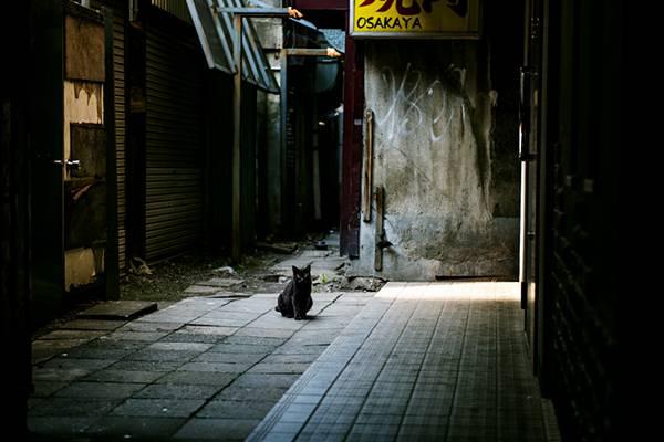 路地裏のクロネコ