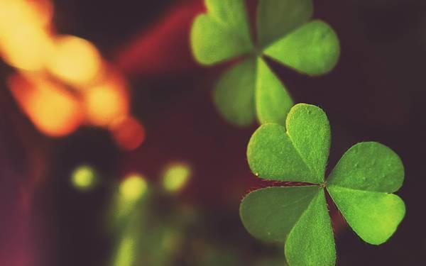 12.クローバーの葉を綺麗なボケで撮影した写真壁紙画像