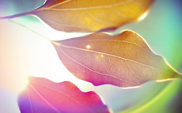 01.光にかざした落ち葉を撮影したカラフルで美しい写真壁紙画像