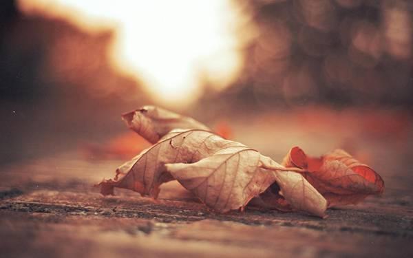 04.丸まった落ち葉を浅い被写界深度で撮影した写真壁紙画像