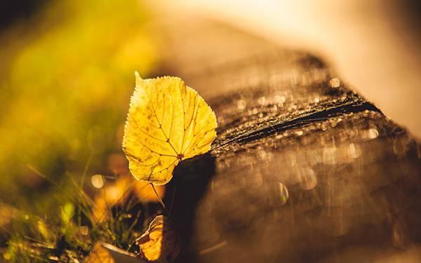 08.イチョウの落葉をマクロ撮影した美しい写真壁紙画像