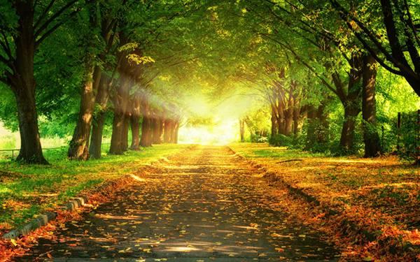 09.光の差し込む落ち葉の道を撮影した美しい写真壁紙画像