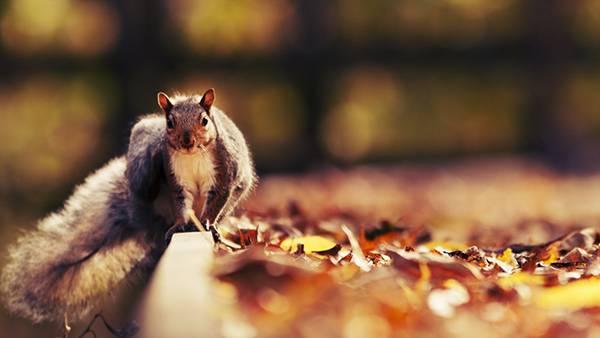10.落ち葉とリスを撮影した可愛い写真壁紙画像