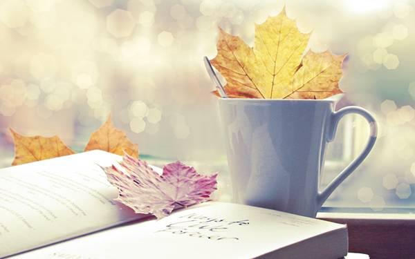 12.窓際に置いた落ち葉と本を撮影した美しい写真壁紙画像