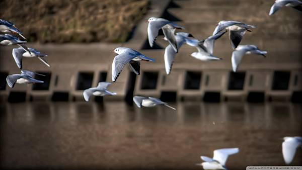 03.飛び交うカモメの群れを撮影したした綺麗な写真壁紙画像