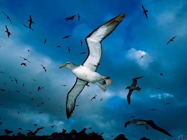 05.翼を広げて飛ぶカモメを撮影した大迫力の写真壁紙画像