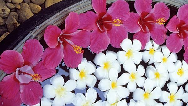 12.水に浮かべたハイビスカスの花びらの綺麗な写真壁紙画像